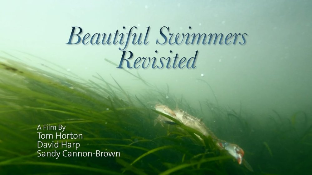 Beautiful-Swimmers-Revisited.jpg