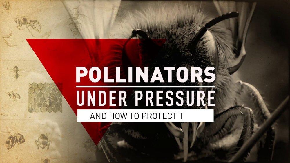 pollinators-under-pressure.jpg