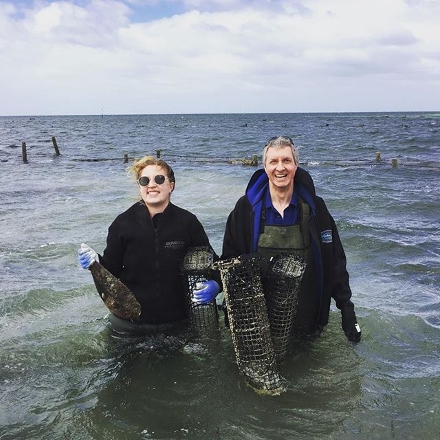 These two deckies were so relaxed and so was the Captain! #deckieforaday #satourism #yorkepeninsula #oysters #spawning #stilldelicious
