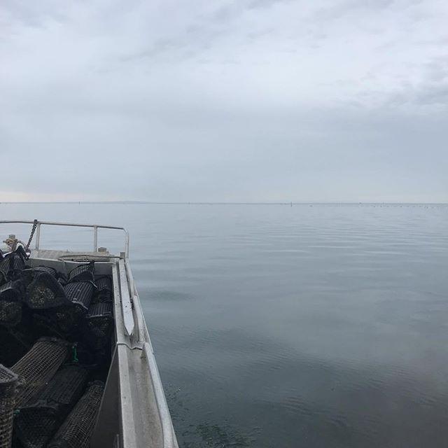 All shades of grey this morning #yorkepeninsula #oysterfarm #oysters #deckieforaday #workingonsaturday
