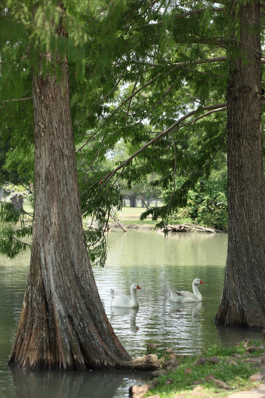 U.S.A. / Texas / Victoria  / Riverside Park