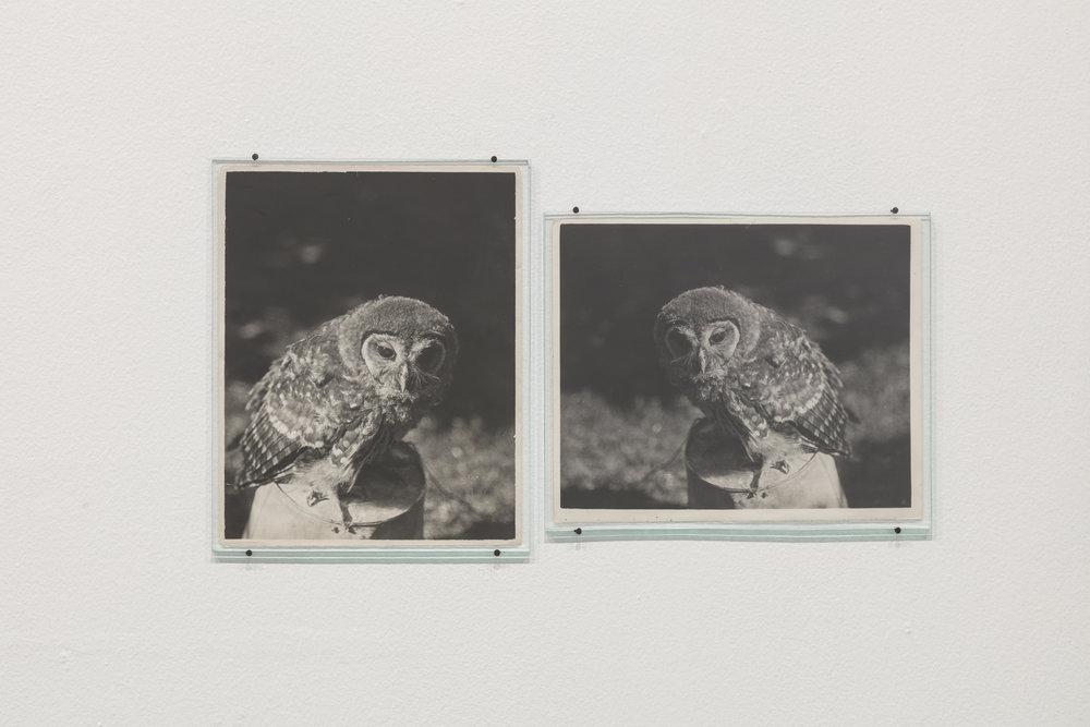Daniel Gustav Cramer, Owl (1932 / 1938), 2017, 2 found photographs, glass plates, nails, 34x58cm. Courtesy of the artist and Grey Noise