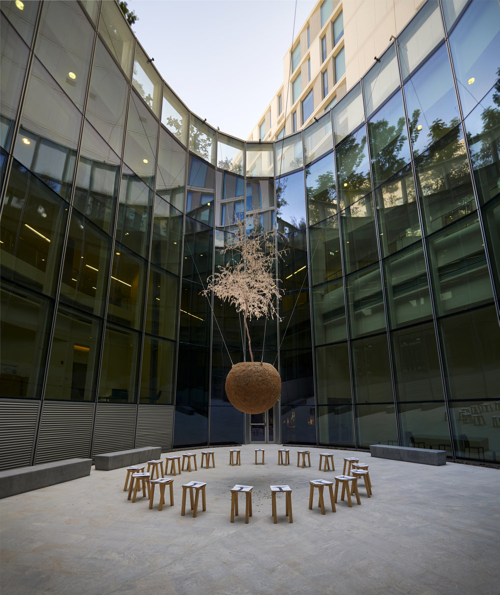 Sandi Hilal and Alessandro Petti.  Mujawara / The Tree School , 2014 – 2018. Stools, Ghaf tree. Courtesy of the Artists and NYU Abu Dhabi Art Gallery. Image by John Varghese