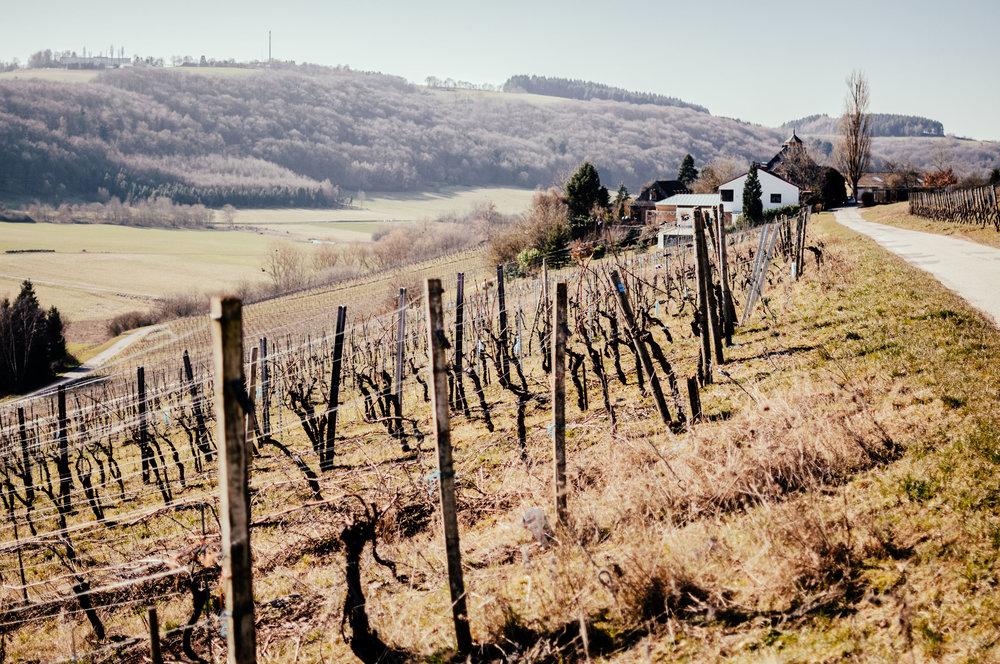 "Read our blog story: ""Uncompromisingly Saar – our visit at Hofgut Falkenstein"" -"