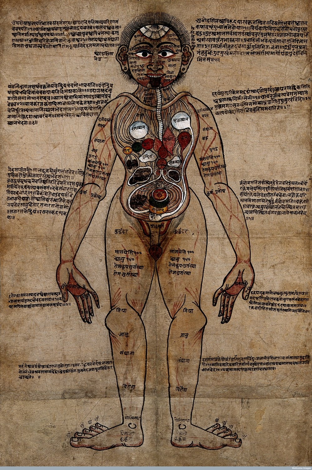 The Ayurvedic Man, pen and watercolour, 18th Century. Wellcome Library, London.