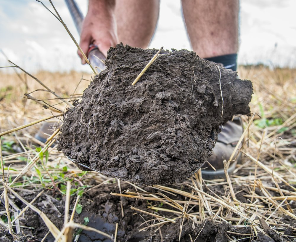 Big Daddy Cover Crops - Sustainability for Generations