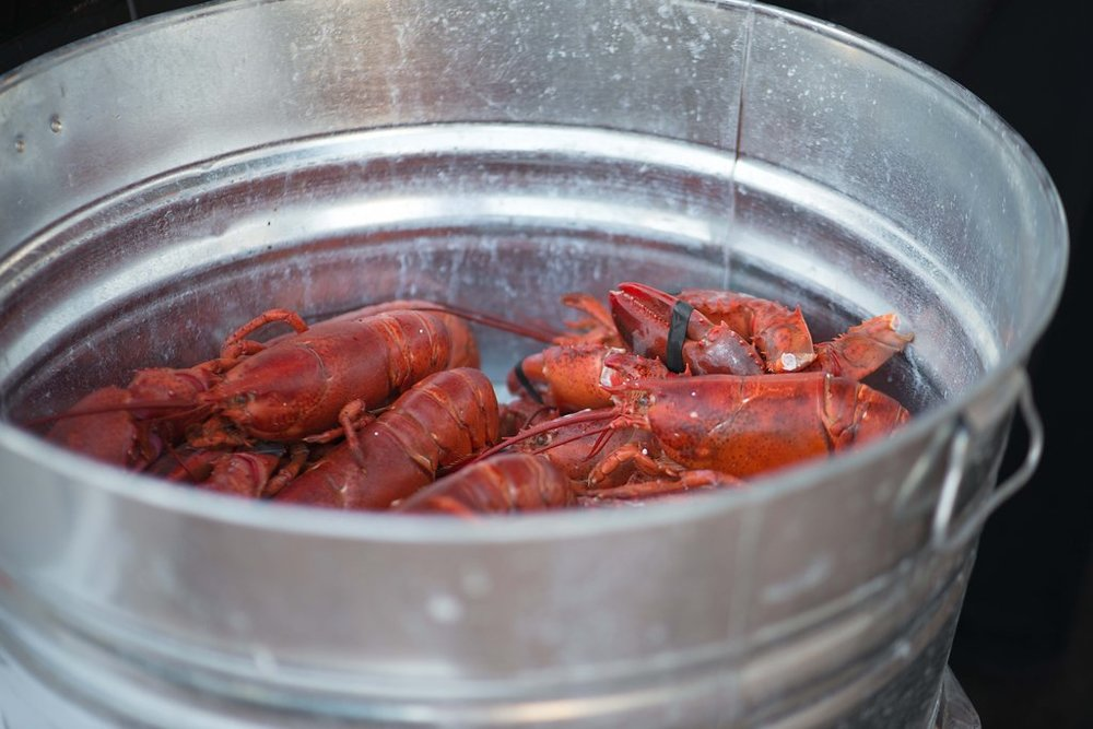 Lobsterfest20144846.jpg