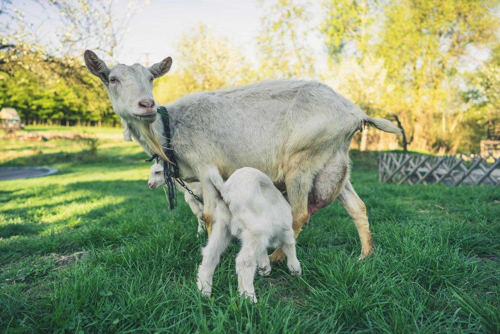 always new life on the farm