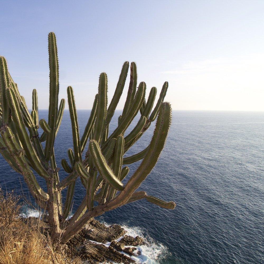 cactus-637795_1920.jpg