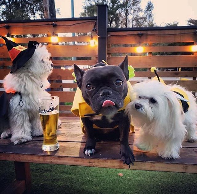 👻 it's getting SPOOKY in Port Moody! From dogs and kids, to adults and more dogs, #PortMoody has a #halloween event for everyone 🎃 Check out our latest blog post for all Halloween events in the City and let us know if you have one to add ☠️ #linkinbio