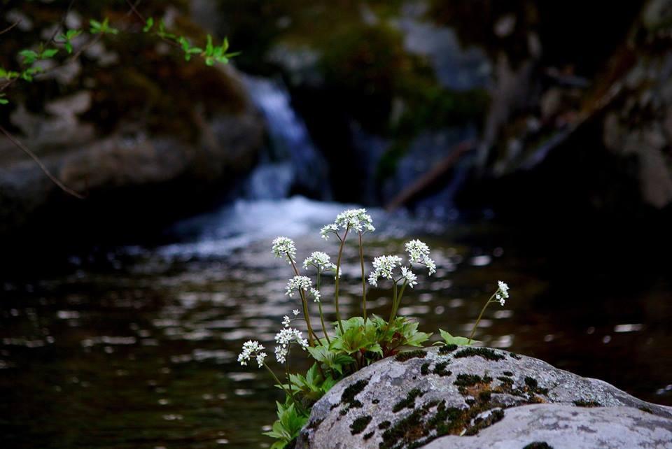gentle heart flowers.jpg