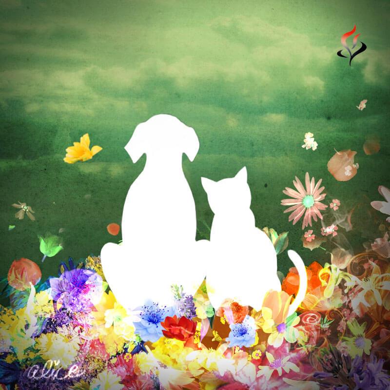 fiori_friend-feature_1.jpg