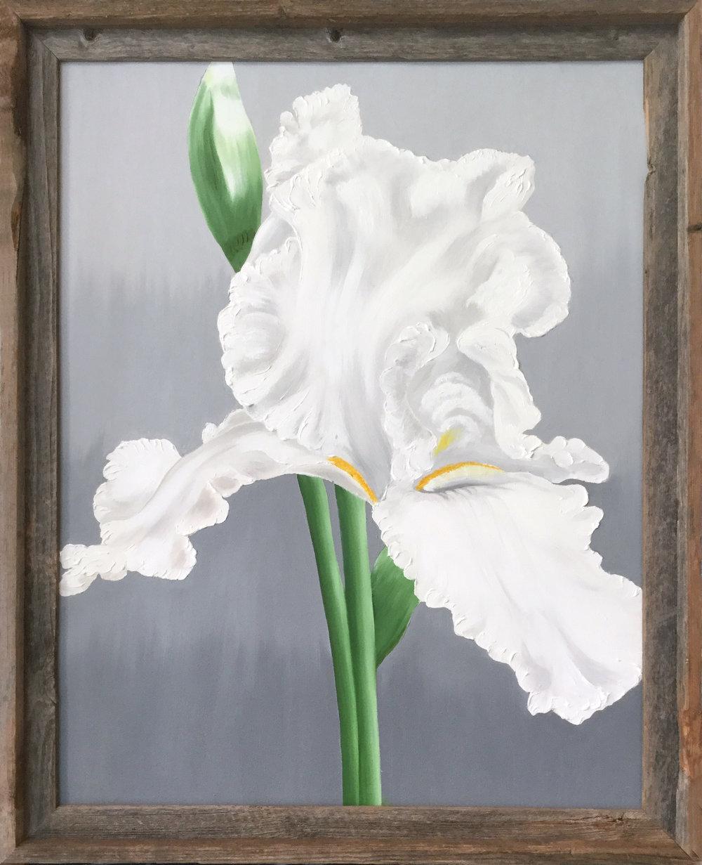 White Iris  2016 Oil on canvas 28 x 22 inches