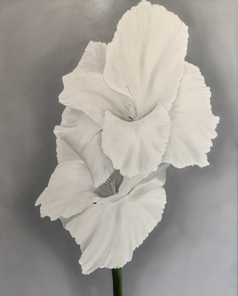 White Gladiolus Double , 2017 3024726156717 Oil on canvas 30 x 24 inches