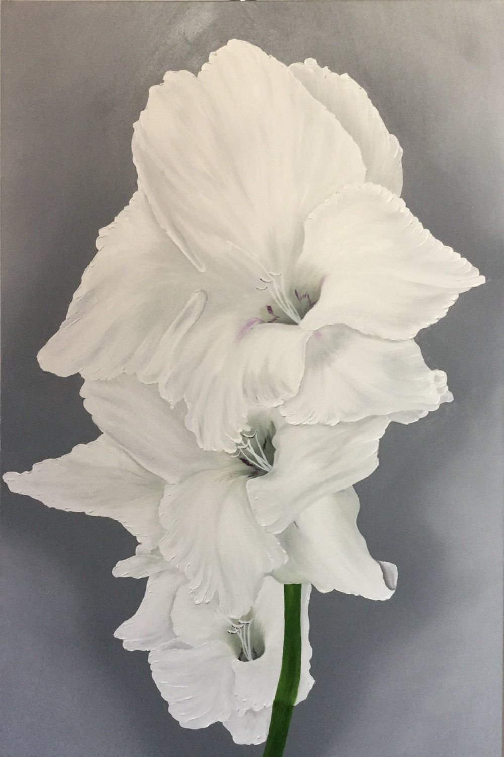 White Gladiolus Triple , 2017 3624725156817 Oil on canvas 36 x 24 inches
