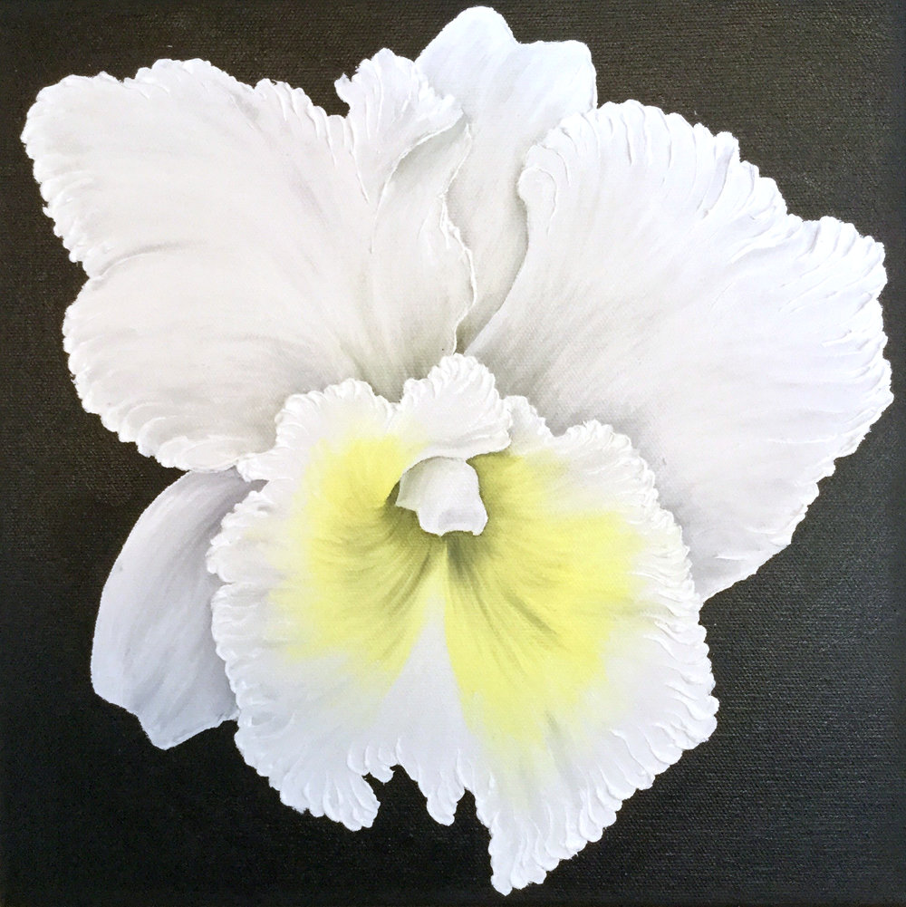 White Dendrobium Orchid , 2017 12124171762417 Oil on canvas 12 x 12 inches