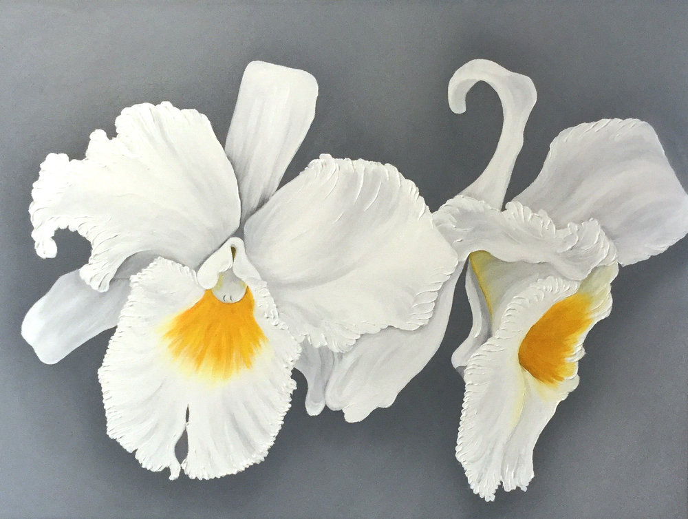 White Cattleya Orchid Double , 2017 12242111661417 Oil on canvas 12 x 24 x 1.5 inches