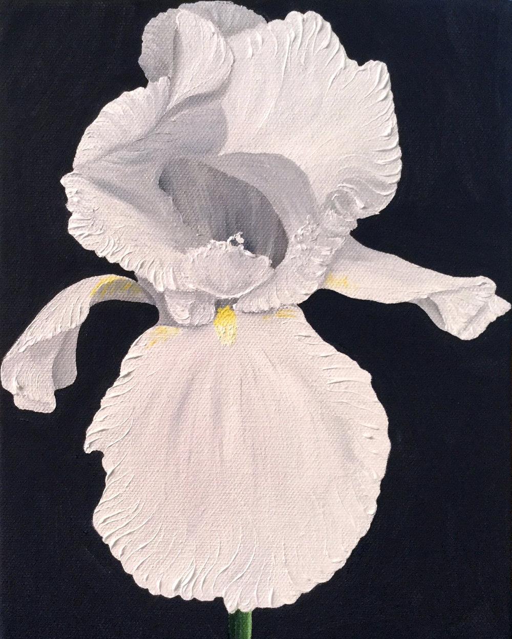 White Iris , 2017  108591772617 Oil on canvas 10 x 8 inches