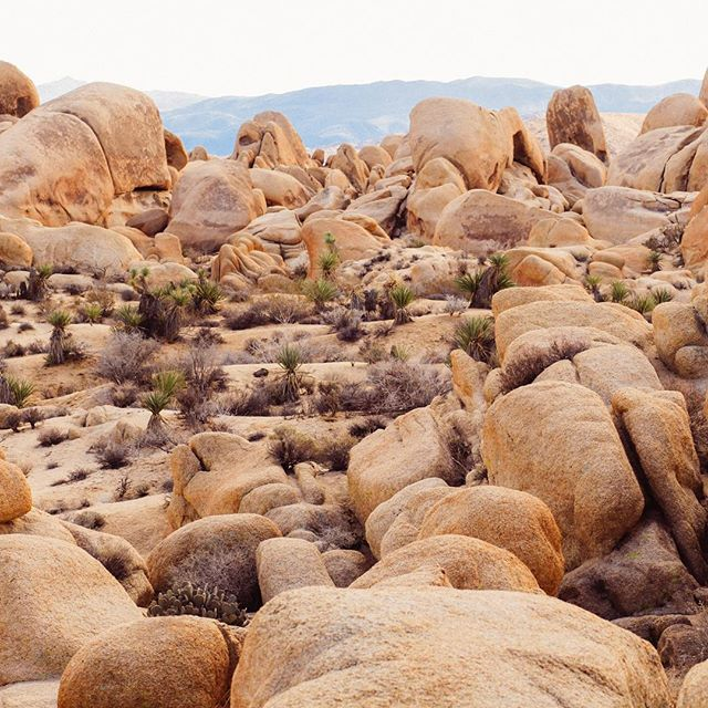 These colors, so many layers, soft diffused light. A landscape to dream about...ahhhhh Joshua Tree.  #brianagraceprintshop #wallart #joshuatree #myhappyplace