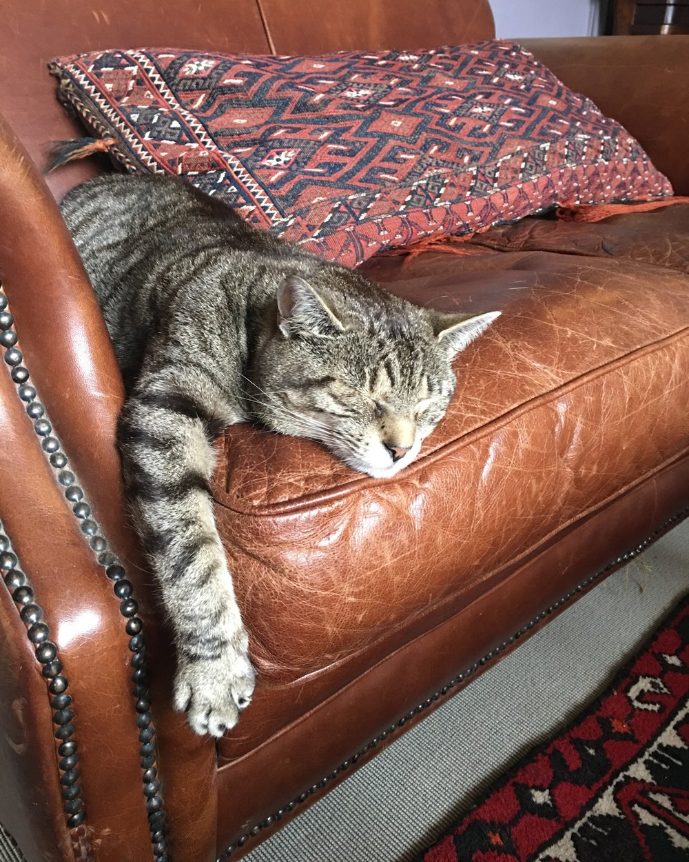 "MR B ""busy"" on chair warming duties."
