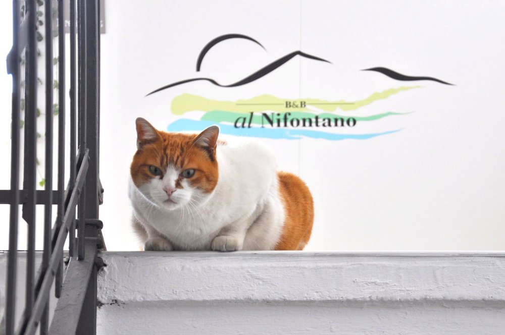 Micia is waiting for you! Images thanks to Al Nifontano Bed and Breakfast.