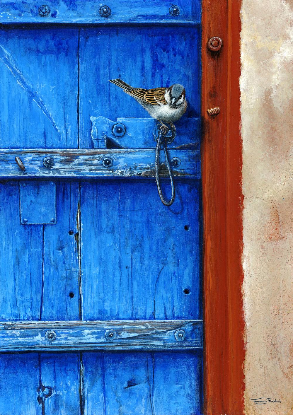 Sparrow---Rajasthan-door --Jeremy Paul 16x12.jpg