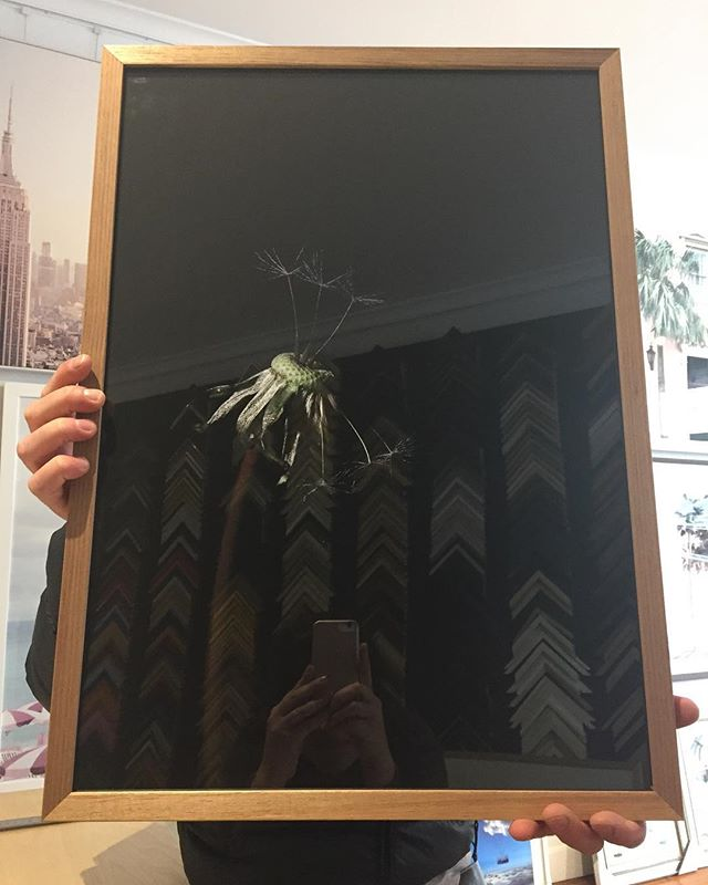 Our Blackwood is the new black 🖤#customframing #dandelion #makeawish✨