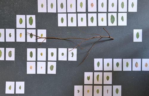Wong Wingsang,  To Memorize a Tree,  2018. Digigraphie, branche d'arbre, dimension variable. © Autorisation de l'artiste
