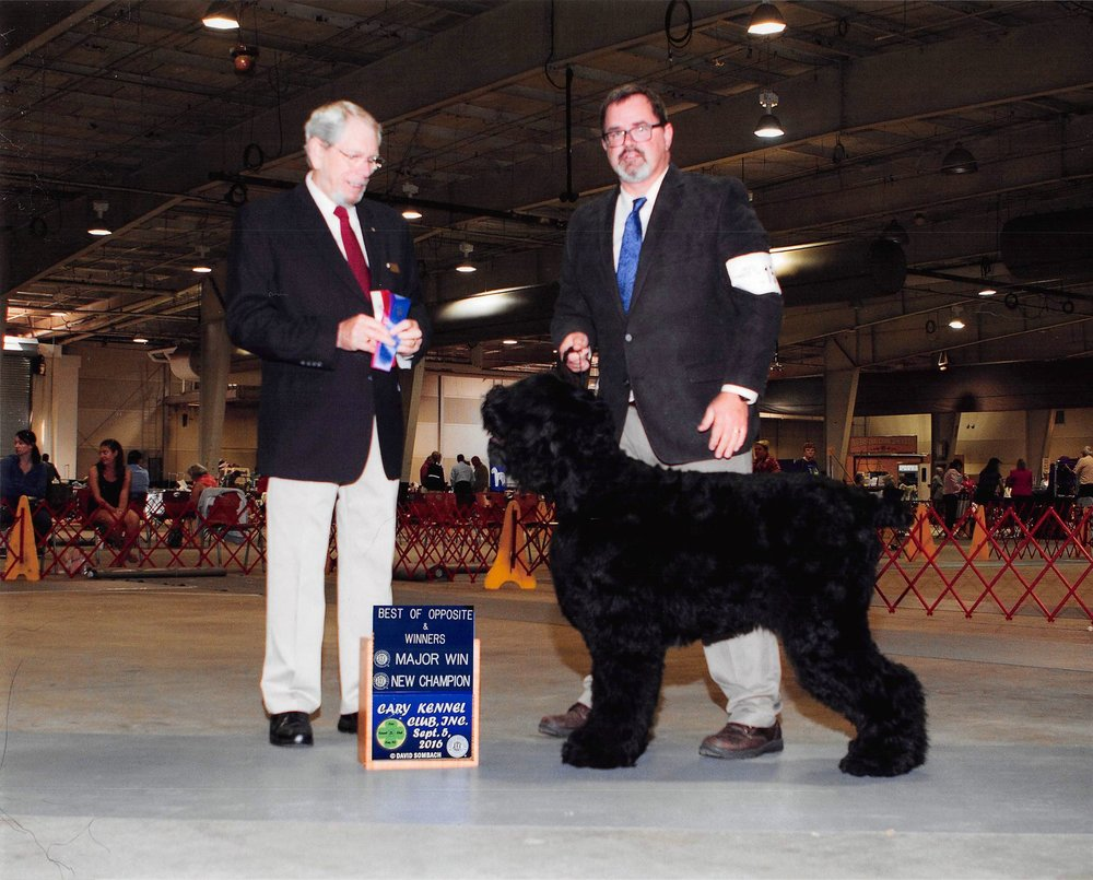 Guardian Bears Kennel's first home grown AKC Champion! -