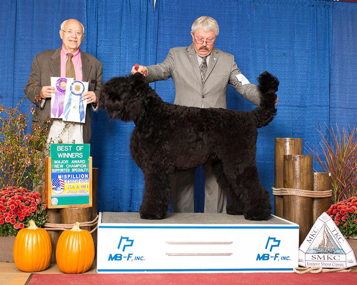 Mishka, Best of Winners, 2014 BRTCA National Specialty, Salisbury, Maryland