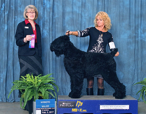 AKC Champion Gemma (Guardian Bears Back In the USSR) scores a major win in Georgia, 2017