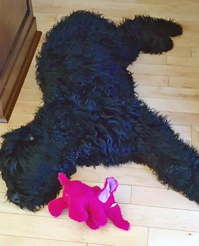 Sirius Black (Guardian Bears Casanova) taking it easy with a pink elephant