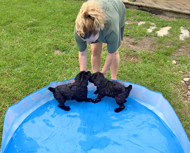 The Baby Beans learning to swim