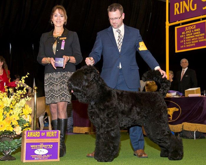 2017 Westminster Kennel Club - Award of Merit - 18 months of age