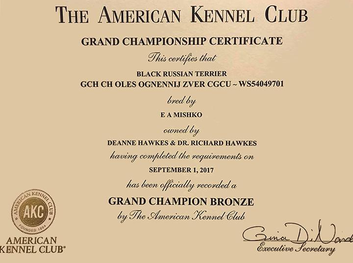 Bronze-Oli-Certificate.jpg