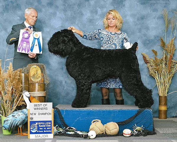 Charlie,     2017 BRTCA National Specialty, new AKC Champion