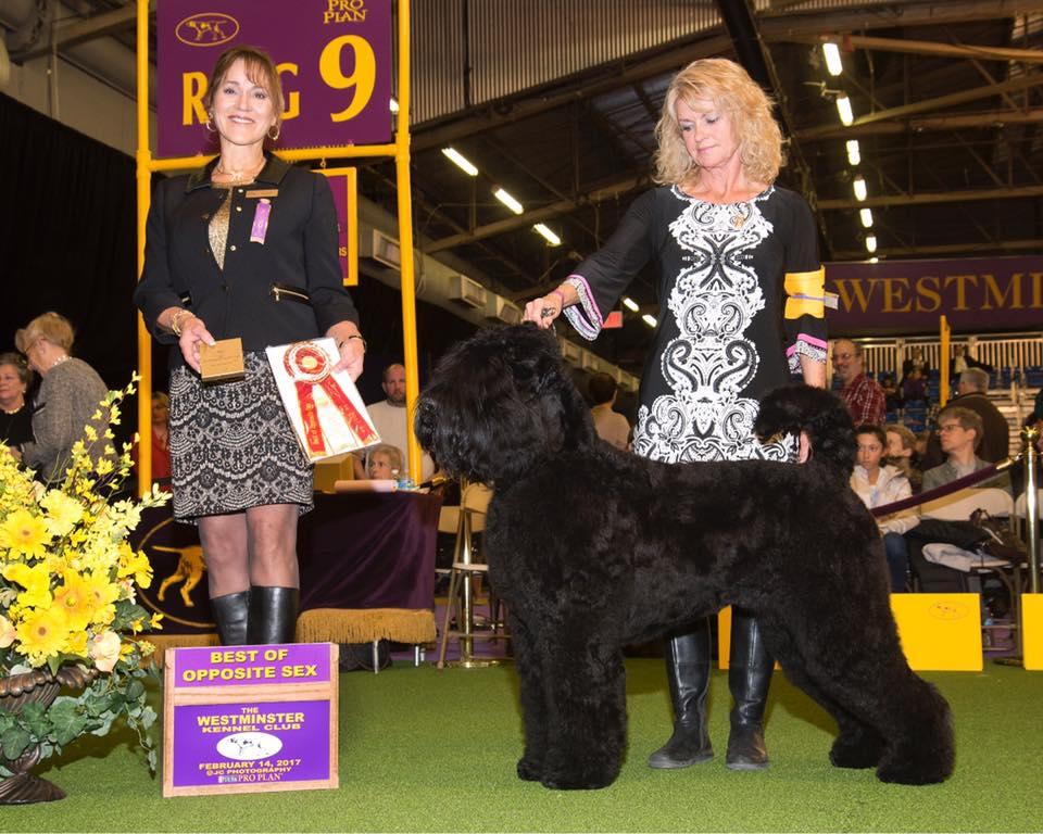 Arisha, Best of Opposite Sex, Westminster Kennel Club