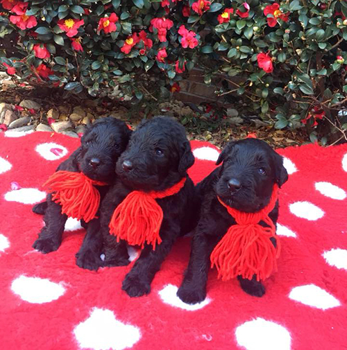 Oli and Arisha —The Royal E Litter! - Click here for photos and videos!