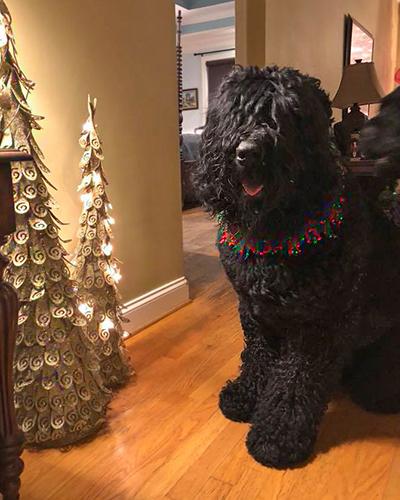 Charlie-Christmas-2017.jpg