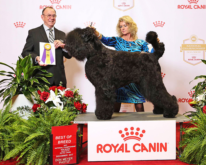 Oli, Best of Breed, 2017 AKC Royal Canin National Championship