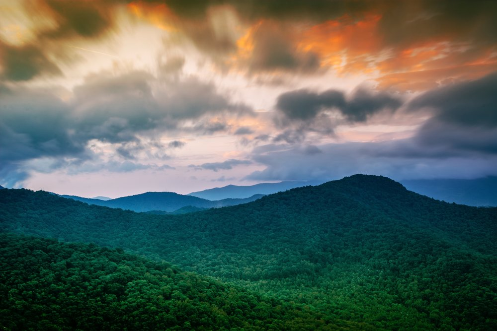 regnskov.jpg
