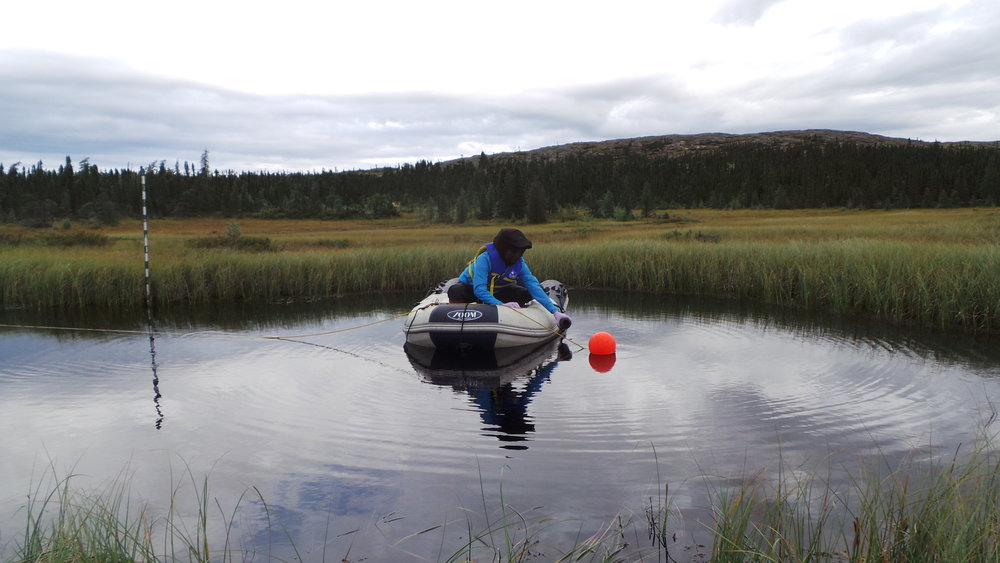 Alice Lévesque in action sampling the thermokarst pond SAS 2A