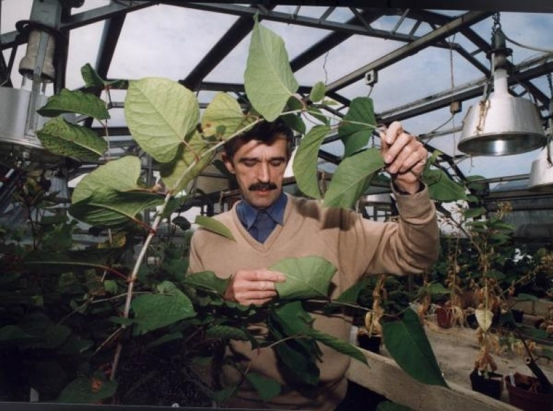 Professor John Bailey - Formerly of Department of Genetics and Genome Biology at University of Leicester.Understudy to Ann Conolly, also of U. of Leicester, both lifetime studies of Japanese knotweed and its relatives.