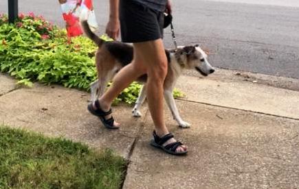 walking harry.jpg