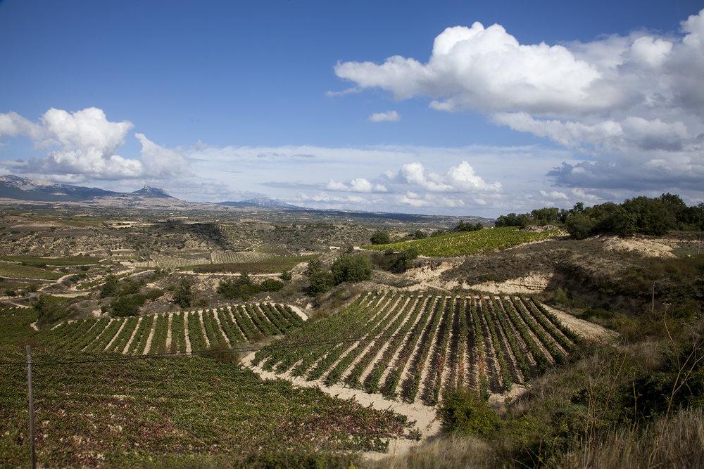 Riojaweb2.jpg