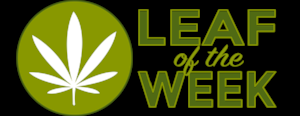 leaf of the week.png