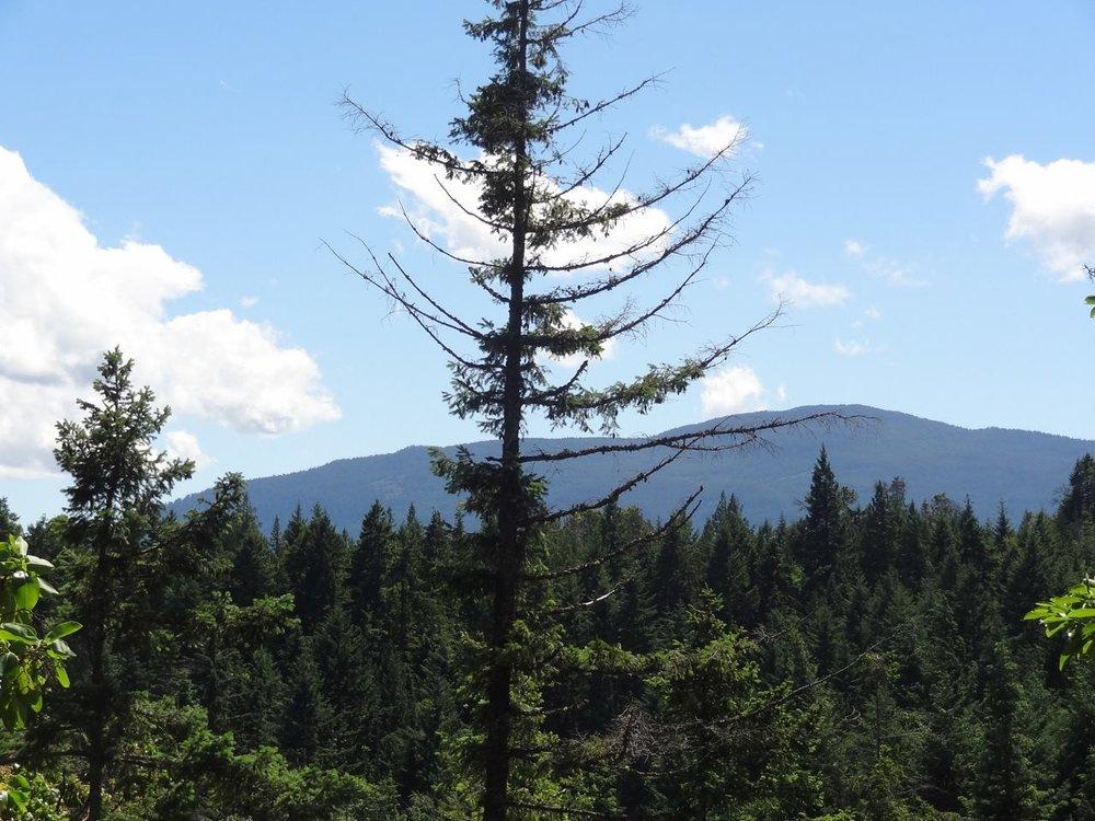 Mount Benson.jpg