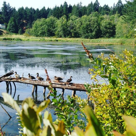 Pond with ducks.jpg