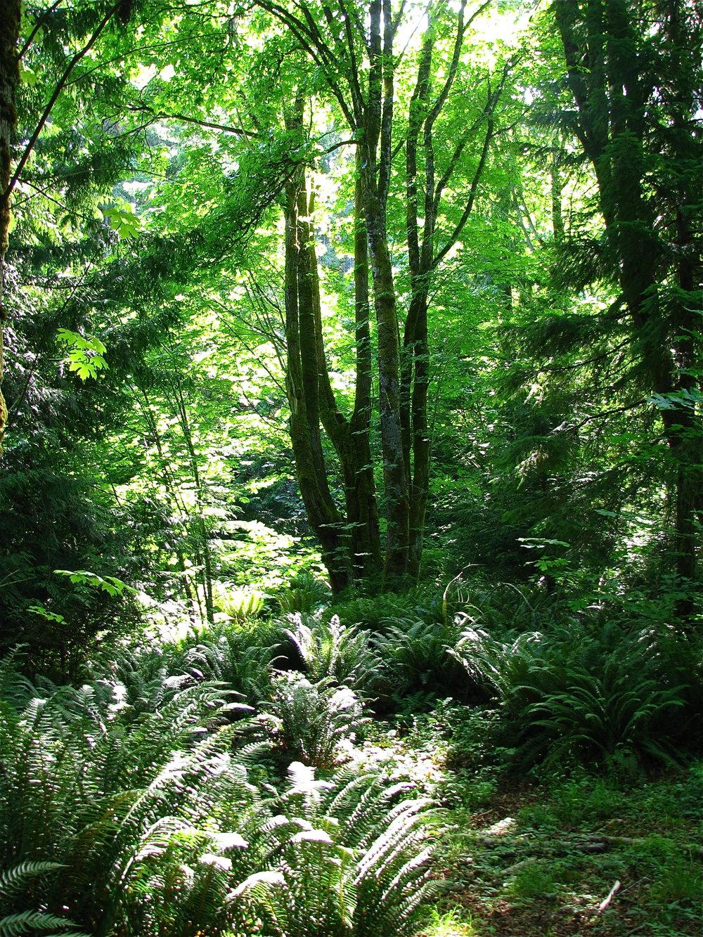 forestsunlightIMG_7966.jpg
