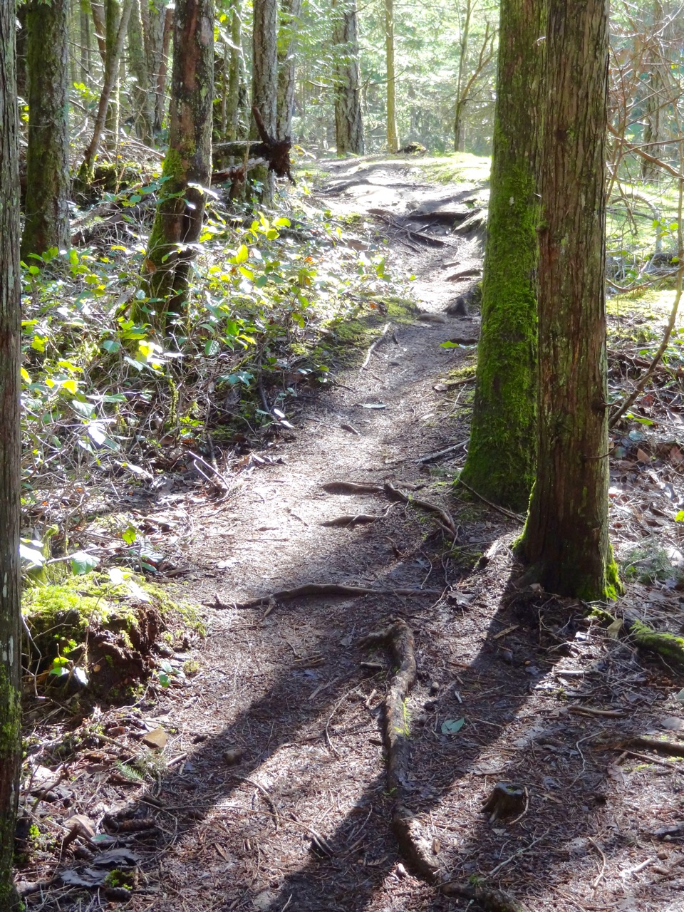 "Linley's Hidden Ridge ""Serenity Trail""     Photo by Ron Clark"